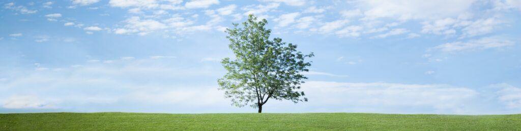 bioaufvorrat.de Nachhaltigkeit Baum auf grüner Wiese vor blauem Horizont