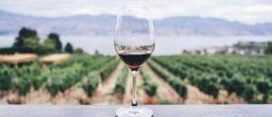 Bio-Rotwein im Glas vor Weinberg im Hintergrund