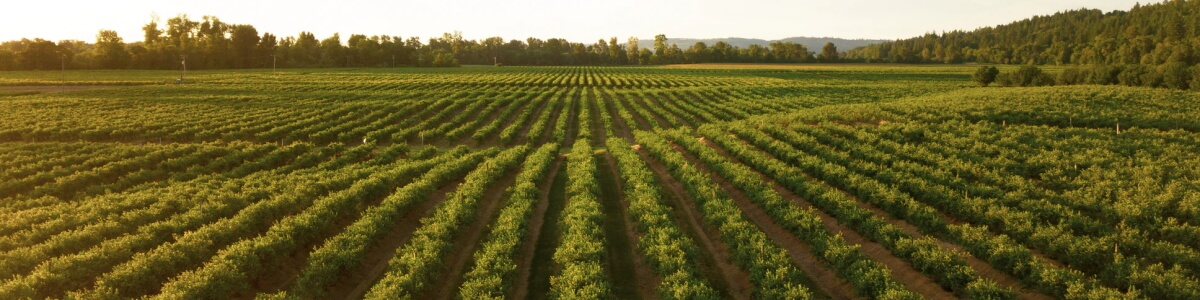 Holle bio baby food - nach biodynamischer Landwirtschaft Möhren